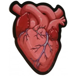 Sticker - Anatomical Heart